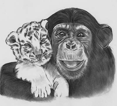 Drawing - Ebony And Ivory by Barb Baker