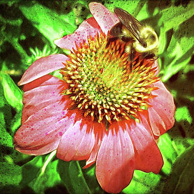 Echinacea And Bee - Grunge Art Print by Leslie Montgomery