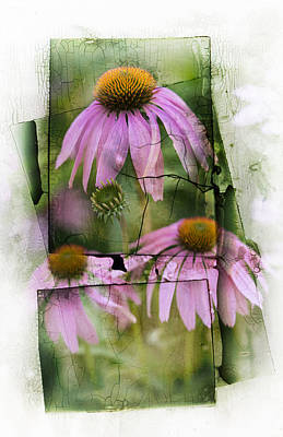 Coneflowers Photograph - Echinacea by Jeff Klingler