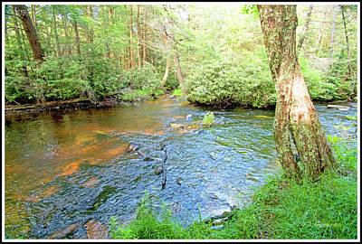 Photograph - Ecology, Lotic. Stream Ecosystem, Pocono Mountains by A Gurmankin
