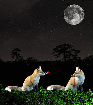 Eftalou Foxes Art Print by Eric Kempson
