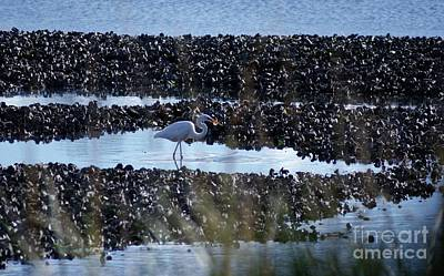 Photograph - Egret In The Marsh by Margie Avellino
