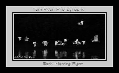 Photograph - Egrets 1265-011518-2cr-bw-matte by Tam Ryan