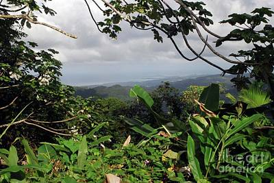 Photograph - El Yunque Rain Forest by Gary Wonning
