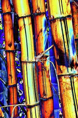 Photograph - Electric Bamboo 1 by Michael Raiman