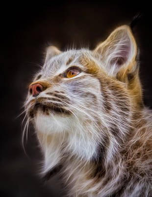 Photograph - Electric Lynx by Rikk Flohr