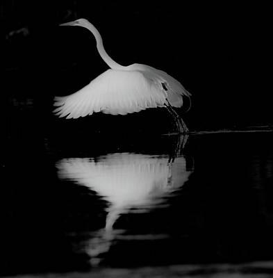 Photograph - Elegance  by John Repoza
