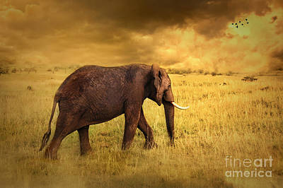 Animals Photos - Elephant by Charuhas Images