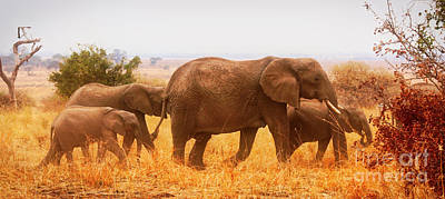 Photograph - Elephant Family by Bruce Block