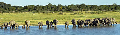 Photograph - Elephant Herd by Tony Murtagh
