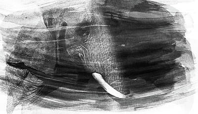 Elephant Print by Martin Newman