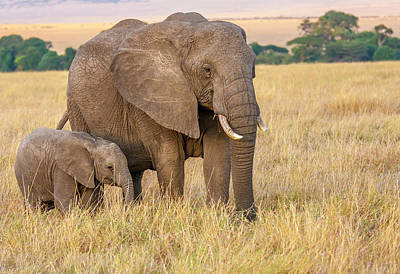 Photograph - Elephant Mother And Calf 2, Kenya by Mark Coran
