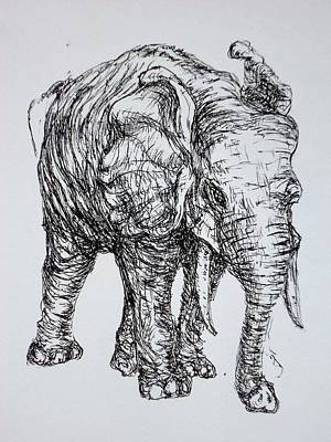 Drawing - Elephant by Pete Maier