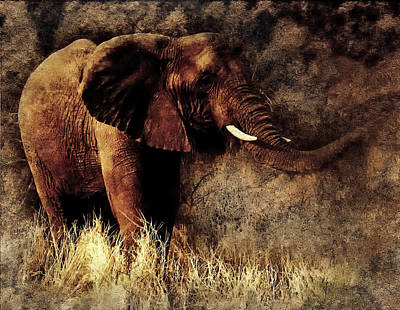 Photograph - Elephant by Ractapopulous