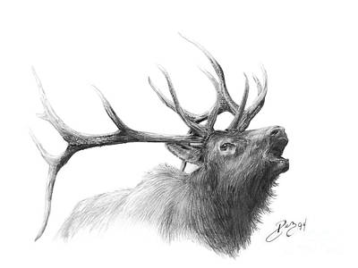 Elk Drawing - Elk by Larry-DEZ- Dismang