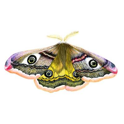 Painting - Emperor Hawk Moth by Alison Langridge