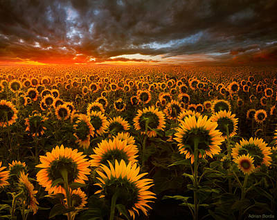 Romania Photograph - Empire Of The Sun by Adrian Borda
