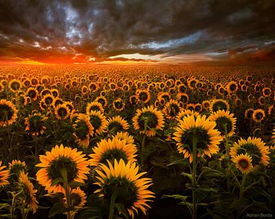 Romania Photograph - Empire Of The Sun by Adrian Borda
