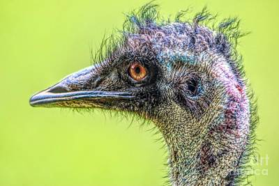 Emu Digital Art - Emu by Paulette Thomas