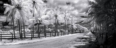 Infra-red Photograph - Enchanted Drive by Sean Davey