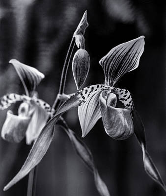 Photograph - Encinitas Orchid by Erik Poppke