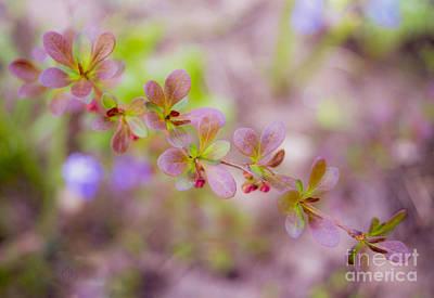The Sakura Photograph - Encyclopedia Of Spring Image 20 by Irina Effa
