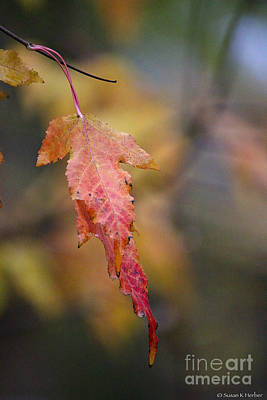 Photograph - End Of Season by Susan Herber