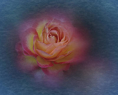 Photograph - End Of September 2016 Rose by Richard Cummings