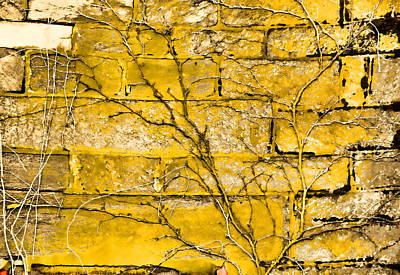 Photograph - Golden Enduring Roots  by JAMART Photography