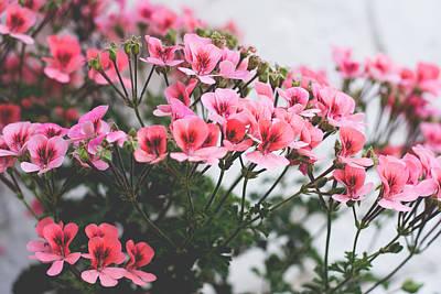 Thomas Kinkade - English geranium flowers  by Newnow Photography By Vera Cepic
