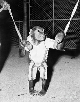 Photograph - Enos The Chimpanzee That Orbited Earth Twice In A Mercury Spacecraft by R Muirhead Art