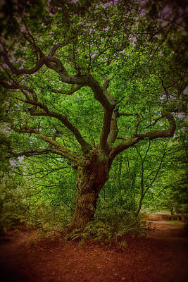 Photograph - Epping Forest Walk by David French