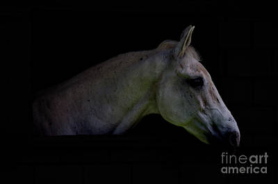 Photograph - Equestrian Beauty by Michelle Meenawong