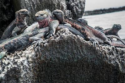 Photograph - Espanola Marine Iguanas by Harry Strharsky