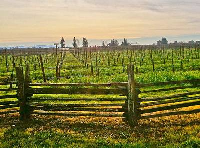 Wine Country Photograph - Essence Of Wine Country by Kathleen Fitzpatrick