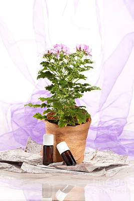Aromatherapy Photograph - Essential Oil Rose Geranium by Wolfgang Steiner
