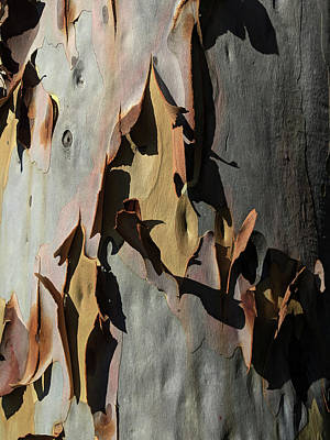 Photograph - Eucalyptus Bark Abstract by Richard Stephen