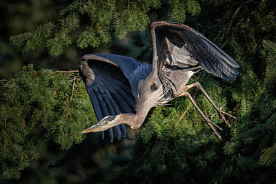 Photograph - Evening Flight by Randy Hall