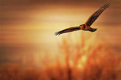 Photograph - Evening Flight by Susan Rissi Tregoning