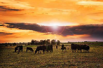 Evening Pastures Art Print by Donna Swiecichowski