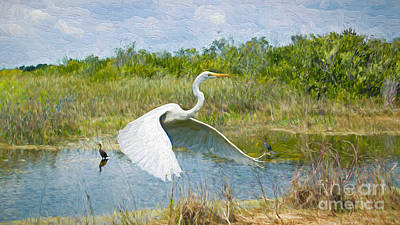 Painting - Everglades Impressions by Judy Kay