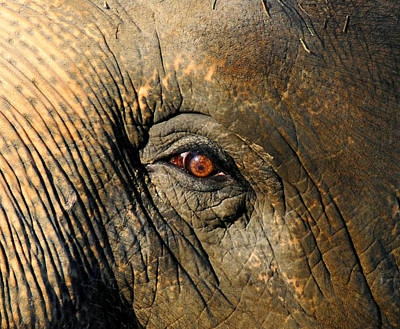 Photograph - Eye Of The Elephant by David Lee Thompson