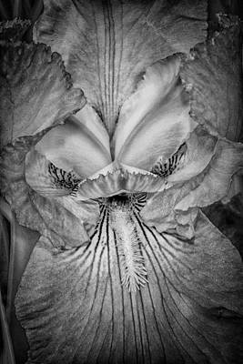 Photograph - Eye Of The Iris by Judy Hall-Folde
