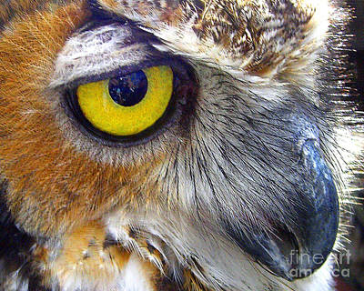 Art Print featuring the photograph Eye Of The Owl by Merton Allen