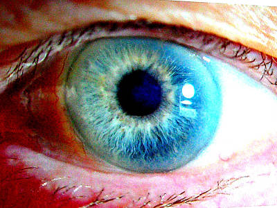 Photograph - Eye See You by Merton Allen