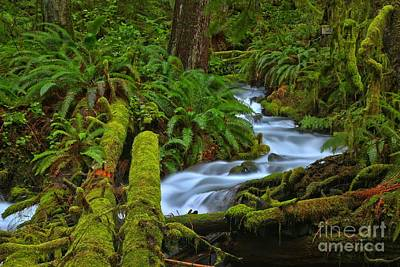 Angeles Forest Photograph - Rainforest Perfection by Adam Jewell