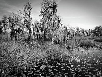 Photograph - Faces Of The Swamp, No. 7 by Elie Wolf