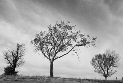 Three Trees Original by John Adams