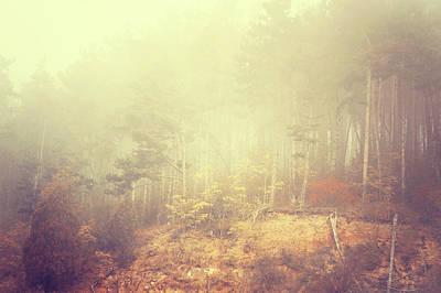 Photograph - Fairy Woods by Jenny Rainbow