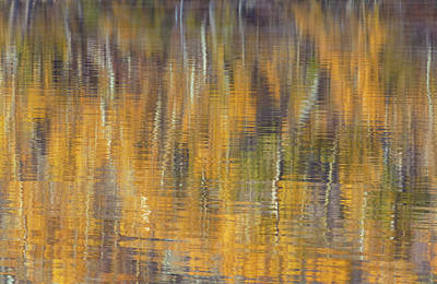 Photograph - Fall Abstract by Jonathan Nguyen